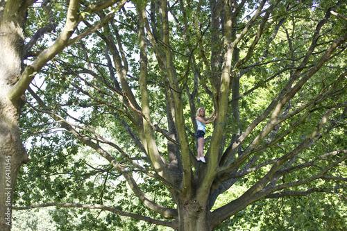 A young girl climbing a tree