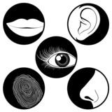 Five senses icons poster