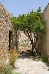 Flowering green tree growing on narrow street between stone wall