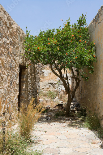 Flowering green tree growing on narrow street between stone wall