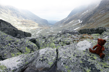 High Tatras, Slovakia, mountains and bear