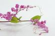 Kleine Rosa Blüten