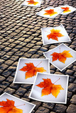 Fallen Autumn  prints