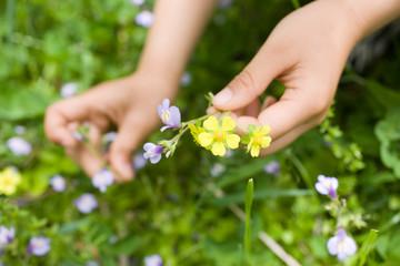 子供の手と野花
