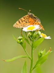 butterfly in spring close up