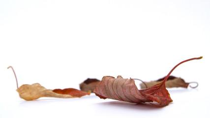 Herbstblätter auf weiss