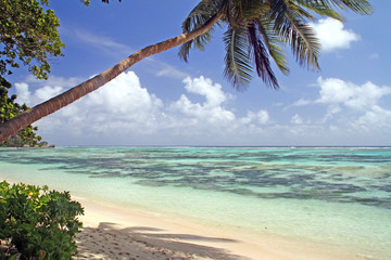 Empty beach with palm tree, La Digue, Seychelles