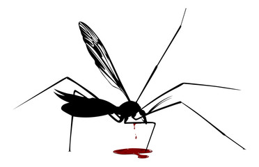 mosquito blood