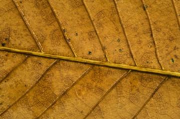 Autumn leaf macro detail