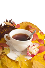 cup of herbal tea and still life from fall colored leaves