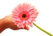 Pink flower in hand