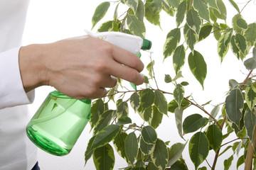 Frau besprüht Pflanze mit Wasser