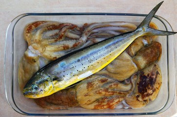 Dolphin fish dorado octopus and cuttlefish