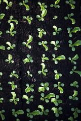 potager vert et jardinage bio