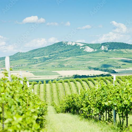 vineyards, Palava, Czech Republic - 26492358