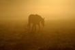 ������, ������: Pferd im Nebel