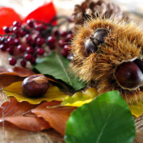 herbstlaub und waldfrüchte