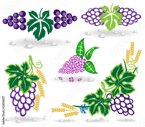 grape lilac icon dew