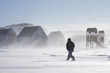 Inuit man walking home in a winter storm, Greenland
