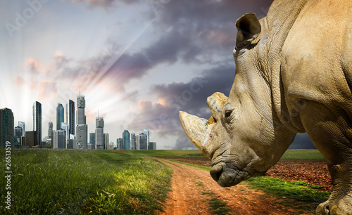 Powerful Rhino At Sunset. Nature Against Progress