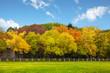 Autumn trees over the blue sky