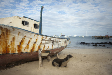 Sea Lion On Beach With Boat