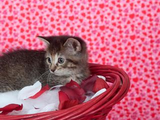 Tabby kitten in red basket