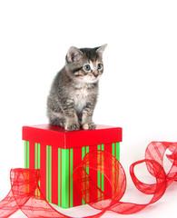 cute tabby kitten sitting on gift box