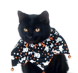 Cute black cat in Halloween bib