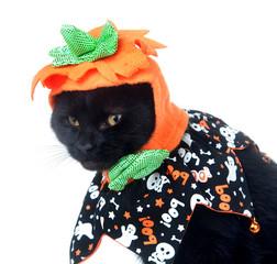 Black cat with Pumkin hat
