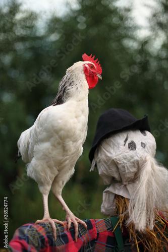 cockcrow