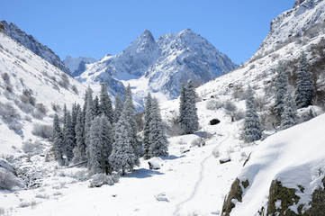 Winter with mountains and fur-trees in snow
