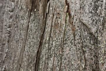 Holz_Textur