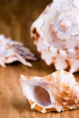 sea shells closeup