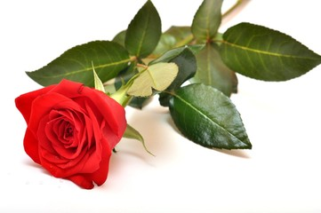 rouge rose