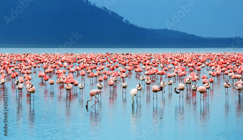 Foto op Canvas Flamingo African flamingos