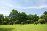 group of elephant tree in the garden