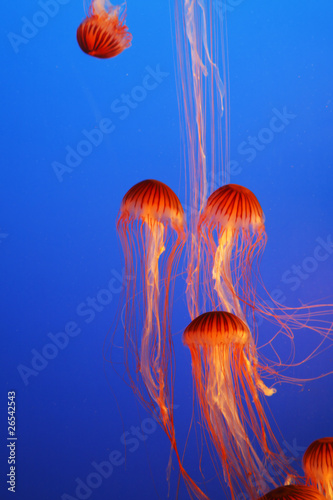 Orange decorative jellyfishes