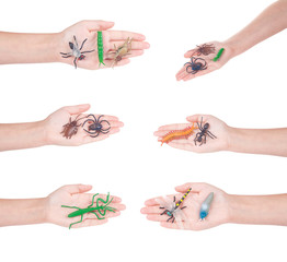 insects in a female hand, isolated
