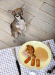 Chihuahua on hind legs to look at food on plate at dinner table
