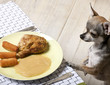 Chihuahua looking at food on plate at dinner table