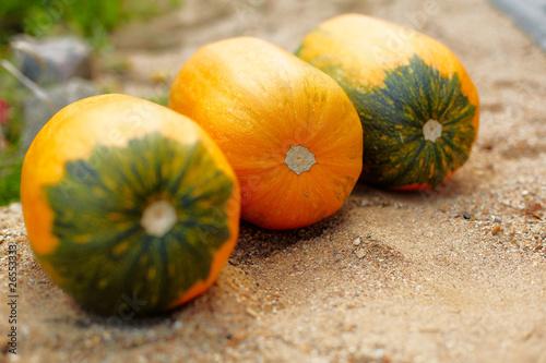 Poster fresh pumpkin
