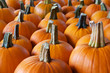 Rows of pumpkins perspective