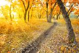 Fototapety autumn morning park