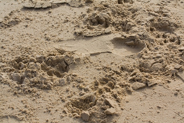 Sand background, with footprints and pawprints.