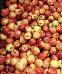 Plein de pommes