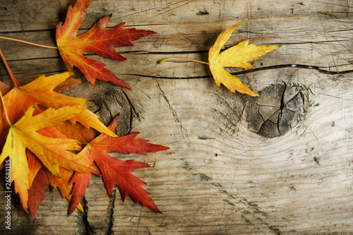 Autumn Leaves over wood background.With copy space
