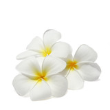 Fototapety Tropical flowers frangipani (plumeria) isolated on white