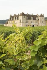 Vineyard Clos de Vougeot Chateau Bourgogne Burgundy France