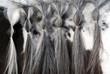 Mane of horse
